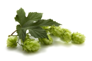 Calculating Hop Bitterness: How much Hops to Use?